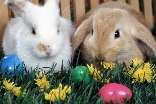 History Of The Easter Bunny Revealed